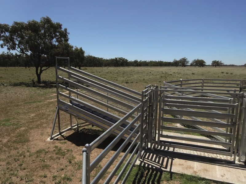 3.8m Standard Cattle Loading Ramp (1)