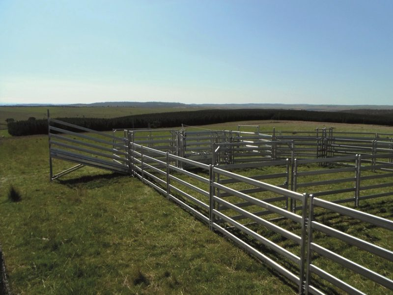 3.8m Standard Cattle Loading Ramp (3)