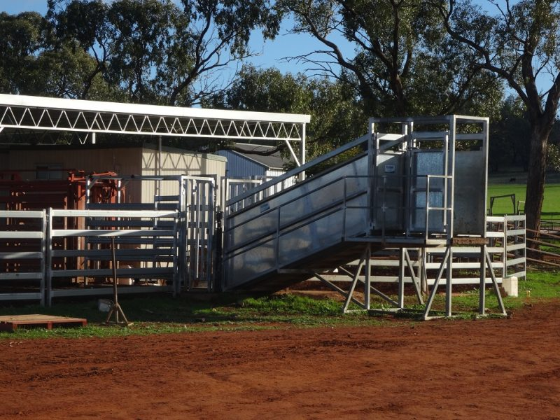 Cattle Loading Ramp with level extension (4)