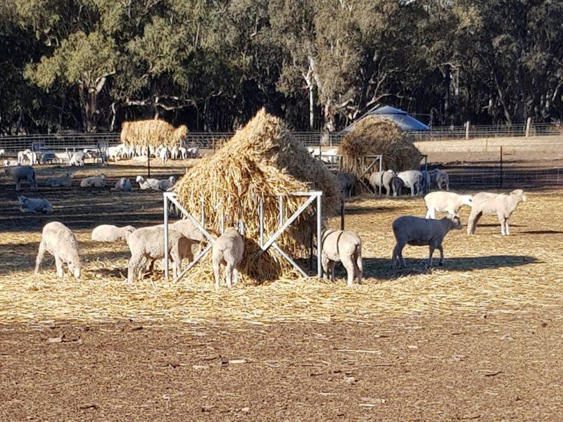 Hay & Grain Feeders