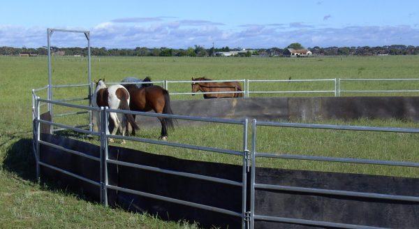 horse handling